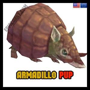 Armadillo Pup