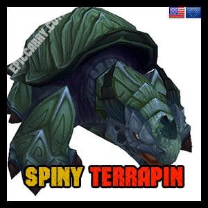 Spiny Terrapin